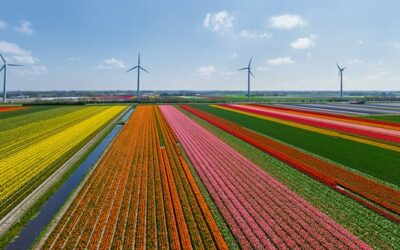 The Netherlands: Most competitive economy in the EU